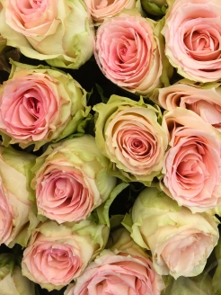 Roses (Pink and Green)