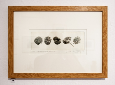 London Plane Seeds, Photo-etching