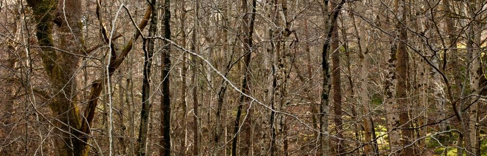 Cawdor Woods-1
