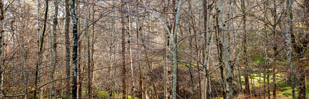 Cawdor Woods-2