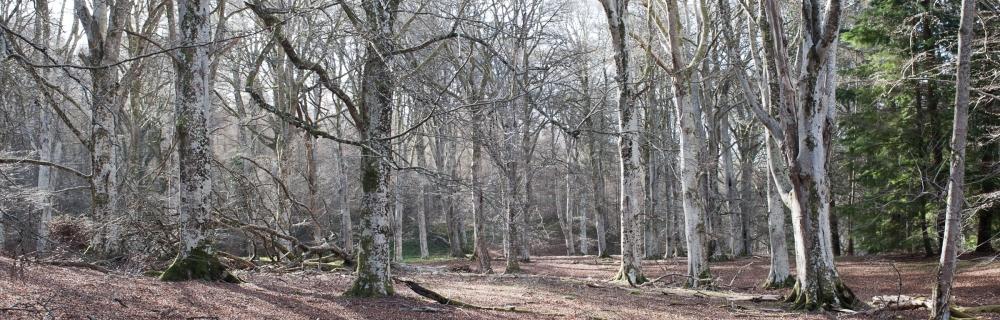 Cawdor Woods-3
