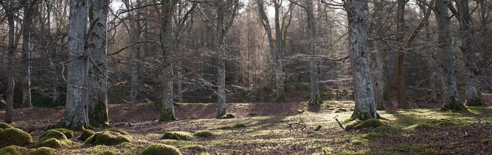 Cawdor Woods-4