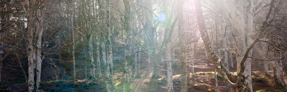 Cawdor Woods-5