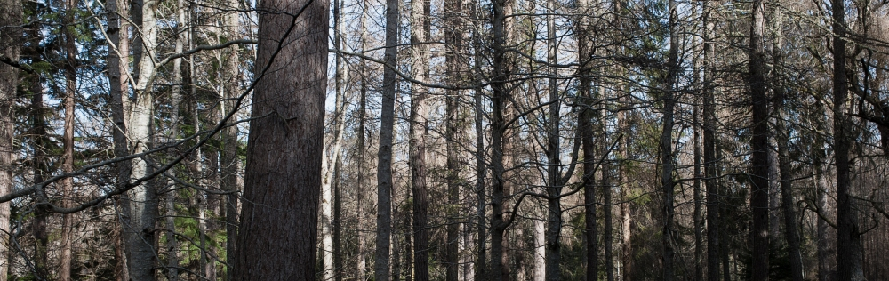 Cawdor Woods-6