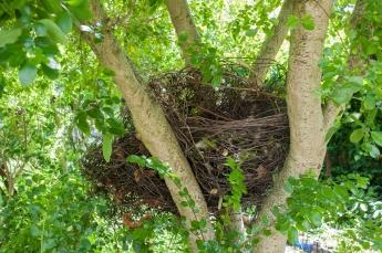 Nest (Installation at the SLBI)